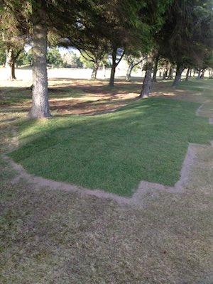 3rd hole roots IGC